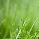 Close up of water droplets on blades of grass - CAIF08546