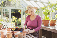 Senior woman potting plants in greenhouse - CAIF09119