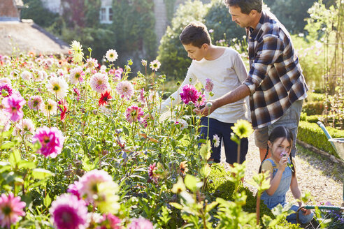 Father and son picking flowers in sunny garden - CAIF09149