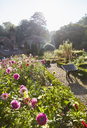 Flowers growing in sunny garden - CAIF09152
