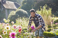 Man pruning flowers in sunny garden - CAIF09158