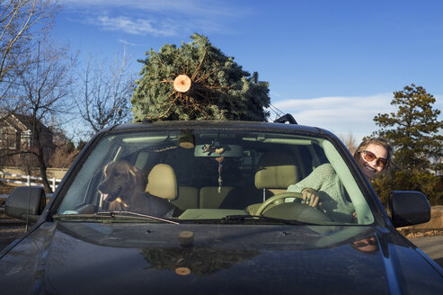 Happy woman with Golden Retriever riding car while carrying pine tree on roof - CAVF04134