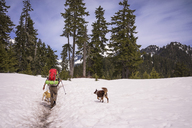 Rear view of hiker with dogs on snow covered field - CAVF04371