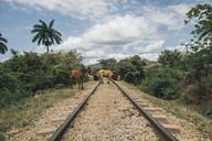 Cuba, Two horses on rail tracks - GUSF00540