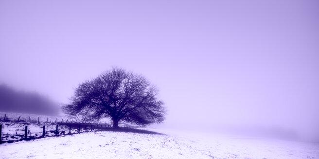 United Kingdom, Scotland, tree in winter, fog - SMAF00981
