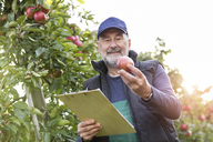 Male farmer with clipboard inspecting apples in orchard - CAIF09954