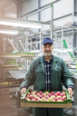 Portrait smiling worker carrying box of apples in food processing plant - CAIF09978