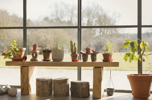 Cacti and potted plants growing in sunroom window - CAIF10325