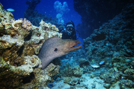 Man scuba diving by moray eel underwater - CAVF05232