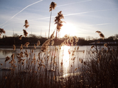 Grass growing by lake against sky during sunset - CAVF05511