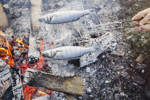 Fish cooking in grill basket over campfire - CAIF10736
