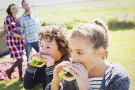 Brother and sister eating hamburgers at sunny campsite - CAIF11504