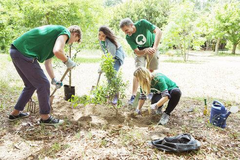 Environmentalist volunteers planting new tree - CAIF11980