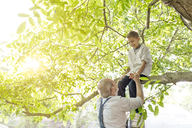 Grandfather helping grandson on tree branch - CAIF13027
