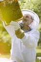 Beekeeper in protective suit examining bees on honeycomb - CAIF13039