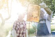 Beekeepers examining sunny bees on honeycomb - CAIF13048