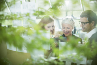 Business people working behind foliage in office - CAIF14923