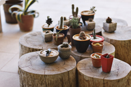 Small pots with different cacti on stumps - CAIF15509