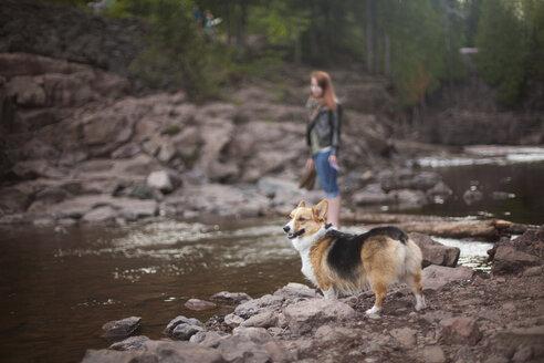Corgi standing on rocks at lakeshore - CAVF07190