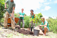 Four people planting tree in community garden - CAIF15722