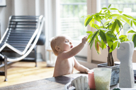 Baby girl reaching potted plant on table at home - CAVF07548