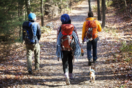 Rear view of friends with backpacks walking on road in forest - CAVF07854