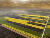 Serbia. Agricultural fields with yellow rape field, aerial view at summer - NOF00017