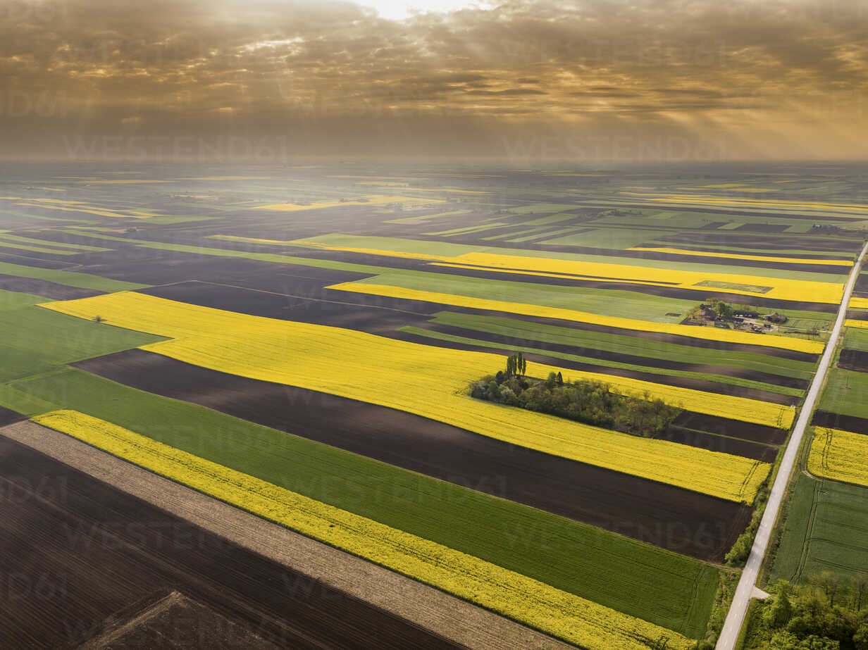 Serbia. Agricultural fields with yellow rape field, aerial view at summer - NOF00017 - oticki/Westend61