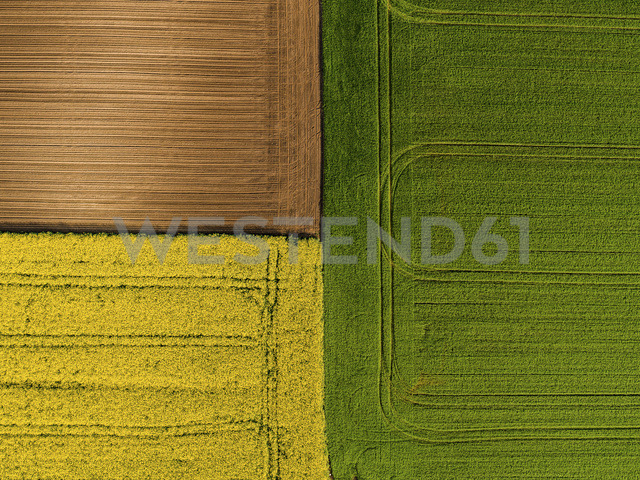 Serbia. Agricultural fields with yellow rape field, aerial view at summer - NOF00020 - oticki/Westend61