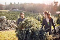 Couple looking at each other while carrying chopped pine tree at tree farm - CAVF08339