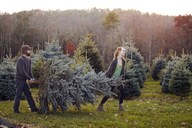 Couple carrying pine tree while walking field at tree farm - CAVF08345