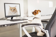 Dog sitting at desk in office - CAIF17482