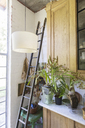 Ladder, plants and cabinets in rustic house - CAIF17539