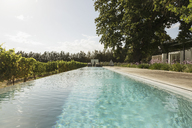 Luxury lap pool among vineyard - CAIF17953