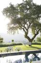 Bench under tree in calm garden - CAIF18253