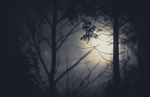 Trees and full moon - STCF00394
