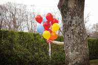 Woman holding helium balloons while hiding behind tree at backyard - CAVF10148