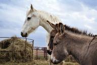 Horse and donkeys on field - CAVF11175