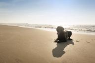 Great Dane sitting on shore against sky - CAVF11250