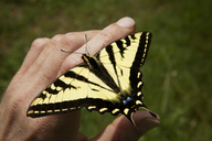 High angle view of monarch butterfly on hand - CAVF11376