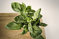 Overhead view of spinach leaves on cutting board - CAVF11508