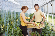 Smiling farmers working in greenhouse - CAVF15221
