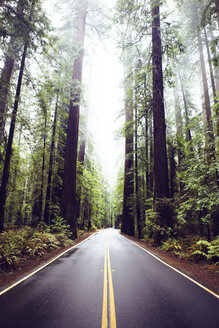 Road amidst redwood trees at state park - CAVF16228