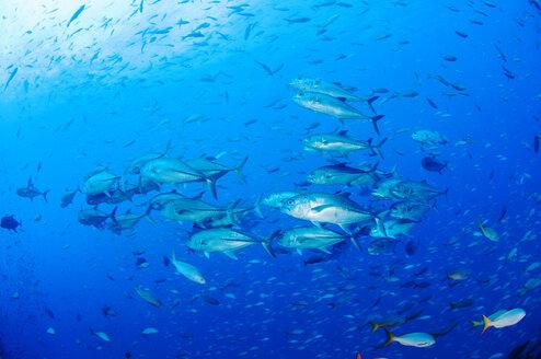 School of fish swimming in sea - CAVF17471