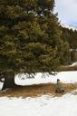 Woman sitting on snow field under tree - CAVF18493