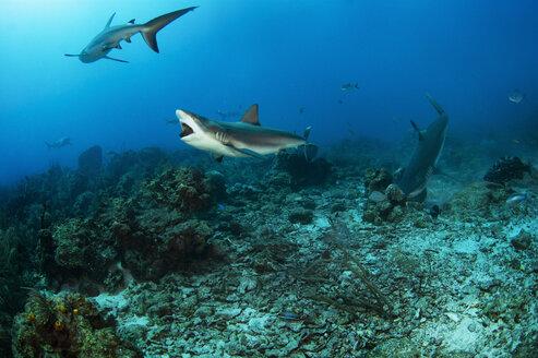Sharks swimming underwater - CAVF18610