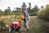 Boy putting pumpkin in cart on field - CAVF18943