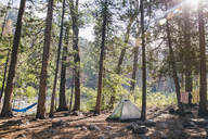 Tent in forest on sunny day - CAVF20533