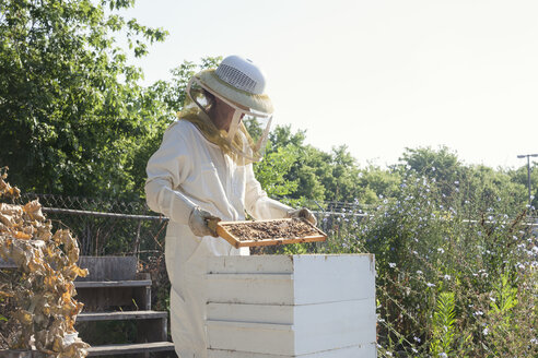 Female worker wearing protective suit while examining beehives at farm - CAVF20821
