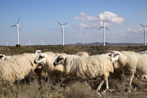 Windmills and Sheep on wind farm against sky - CAVF22651